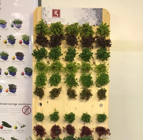 Koppert Cress micro vegetables displays
